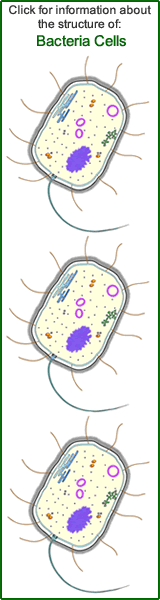 Bacteria Cell Structure - Diagram of a Bacteria Cell