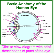 Eye diagram and function complete wiring diagrams the anatomy of the human eye with diagram of the eye rh ivyroses com eye diagram function matlab eye anatomy and function ccuart Images