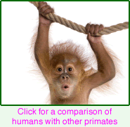 Humans as primates