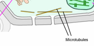 Plant cell structure as biology above diagram of the structure of a plant cell ccuart Gallery