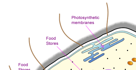 Prokaryotic cell structure as biology diagram of a general prokaryotic cell ccuart Images