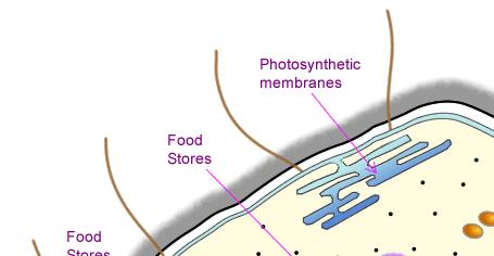 Diagram of a prokaryotic cell