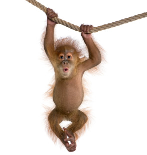 similarities in human and nonhuman primates Nonhuman primates serve as vital models for human disease aging nonhuman primates have many similarities to humans when it comes to lesions of the reproductive tract.