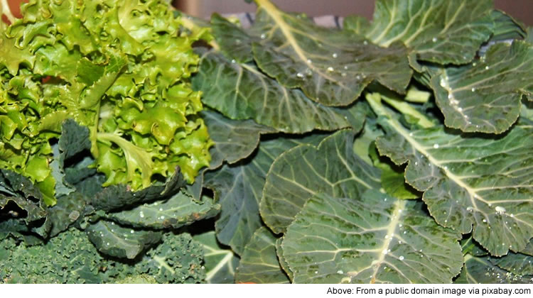 Many green leafy plants, e.g. kale, contain vitamin K