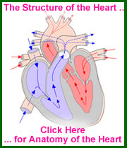 The Heart is an example of an organ of the human body. Click for further information.