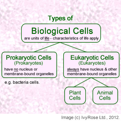 Prokaryotic cells essay