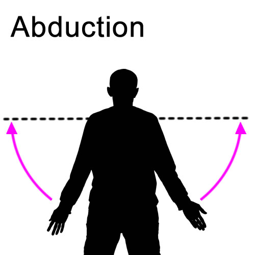 Abduction : Muscle Actions : Joint Movements