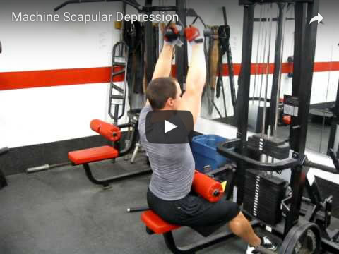 Depression : Muscle Actions : Joint Movements