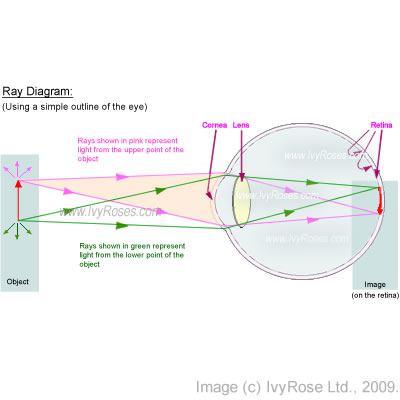 Image formation within the human eye simple ray diagram through image formation within the human eye simple ray diagram through the eye ccuart Choice Image