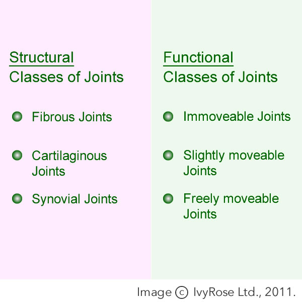Types Of Joints Bone Joints