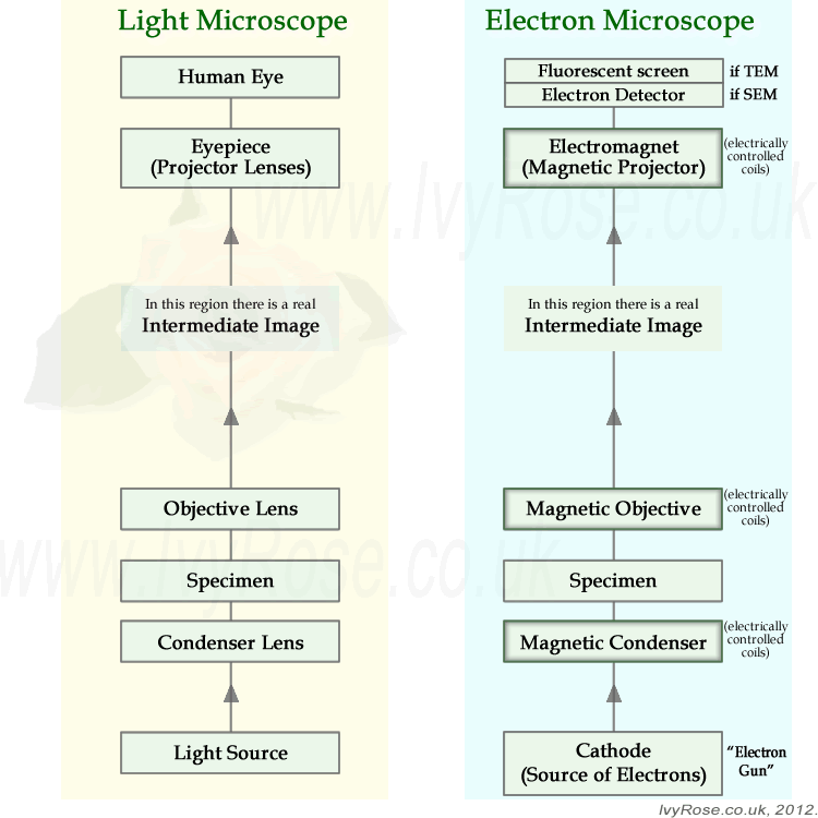 Diagram comparing a light microscope with an electron microscope - simple block representation rather than full ray diagram