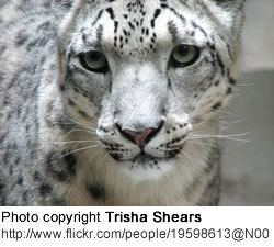 Snow Leopards and stem cell research