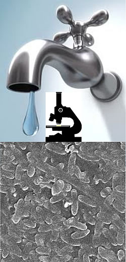 Bacteria in hospital water systems and taps