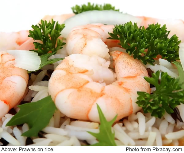 cooked prawns on white rice