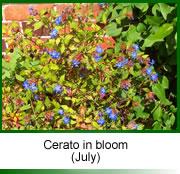 certo flowers (July)