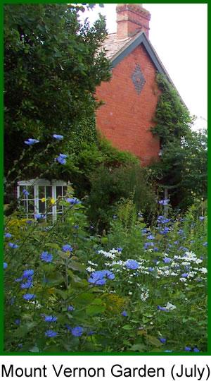 Mount Vernon Garden, July